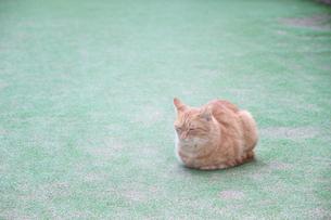 丸くなって眠る猫の写真素材 [FYI00316973]