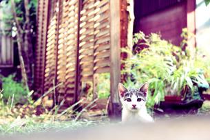 子猫の写真素材 [FYI00316976]