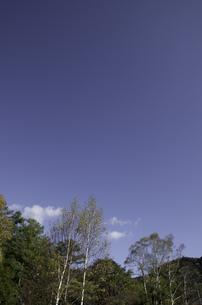 青空と少し早い紅葉の写真素材 [FYI00316999]