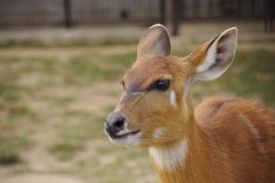 鹿の写真素材 [FYI00317455]