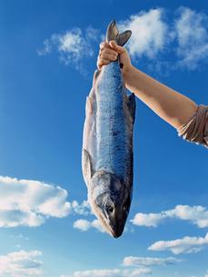 漁れたて銀鮭の素材 [FYI00317752]
