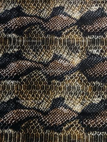 ヘビ柄の写真素材 [FYI00317755]