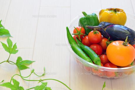 摘みたての夏野菜の写真素材 [FYI00317776]