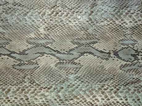 蛇柄の写真素材 [FYI00317790]