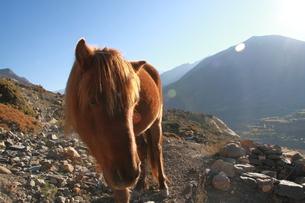 馬に接近の写真素材 [FYI00318125]