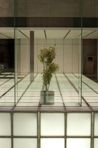 ディスプレイされた植物の写真素材 [FYI00318229]