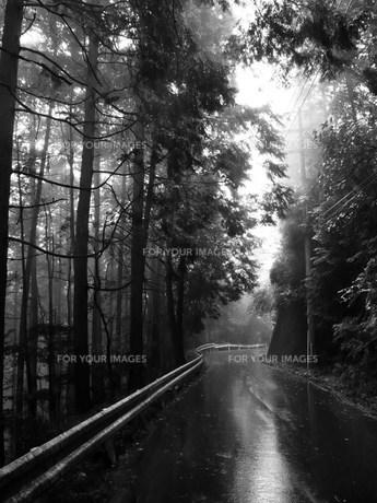 霧雨の山道 モノクロの写真素材 [FYI00318864]