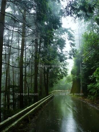 霧雨の山道の写真素材 [FYI00318866]