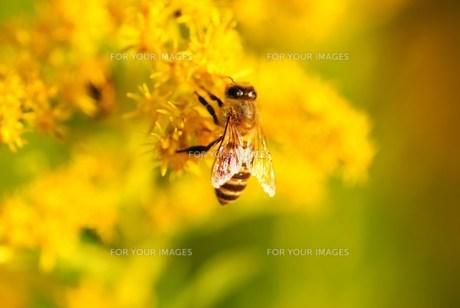 黄色の世界で♪の写真素材 [FYI00318914]