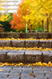階段に落ち葉の写真素材 [FYI00318944]