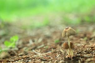 自然の営み(きのこ)の写真素材 [FYI00319202]