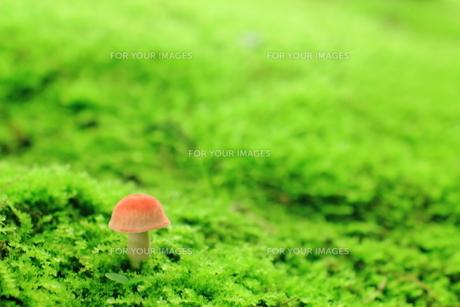 苔の緑と赤いキノコの素材 [FYI00319209]