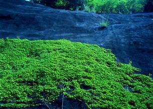 岩山を伝う緑のカーテンの素材 [FYI00319253]