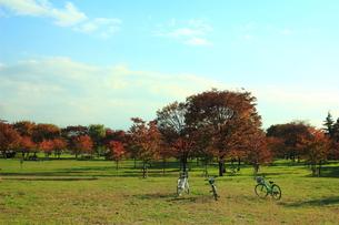 秋の公演に置かれた自転車の写真素材 [FYI00319323]