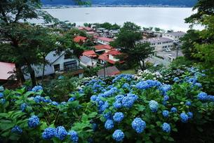 諏訪湖を背景に。の写真素材 [FYI00319389]