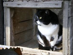 黒猫の写真素材 [FYI00319421]