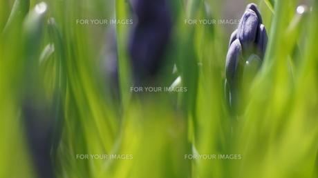 春の草花の素材 [FYI00320041]