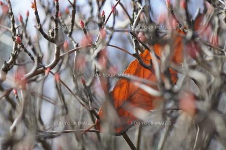 葉っぱのハンモックの写真素材 [FYI00320055]