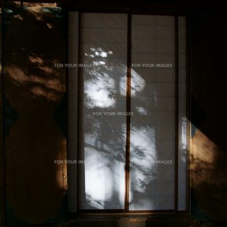 木漏れ日の写真素材 [FYI00320396]