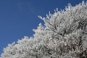 樹氷の素材 [FYI00320567]