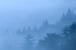 高野山 朝露の山景の写真素材 [FYI00321447]