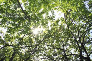 木漏れ日の写真素材 [FYI00321559]