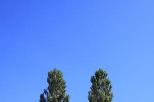 青空とポプラの写真素材 [FYI00321594]