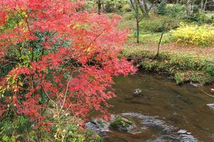 紅葉と川の流れの写真素材 [FYI00321624]