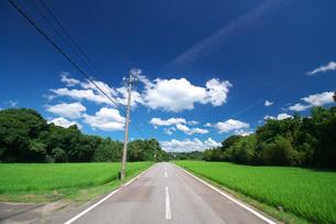緑の田んぼと青空と道路の写真素材 [FYI00321634]