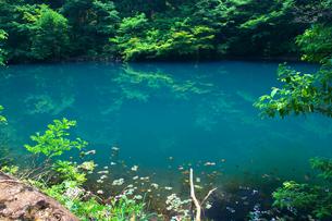 青い池の写真素材 [FYI00321640]