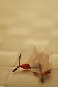 白い花の素材 [FYI00321657]
