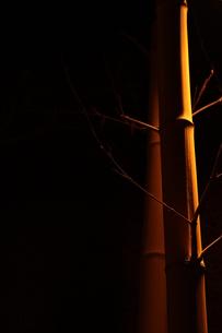 竹のように真直ぐにの素材 [FYI00321673]