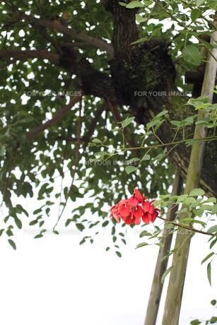 樹木の素材 [FYI00321706]