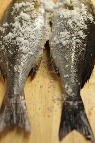 魚の素材 [FYI00321714]