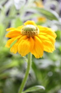 花の素材 [FYI00321771]