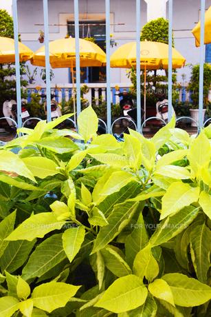 庭先の植物の素材 [FYI00321787]