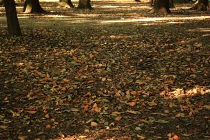 秋の匂いの写真素材 [FYI00322010]