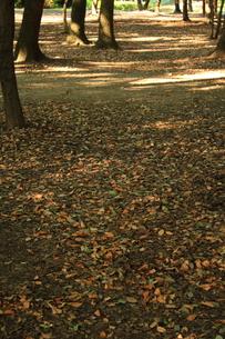 秋の匂いの写真素材 [FYI00322011]