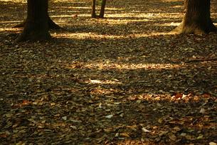 秋の匂いの写真素材 [FYI00322029]