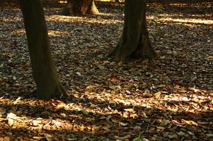 秋の匂いの写真素材 [FYI00322031]