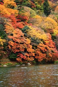嵐山と保津川の素材 [FYI00322080]