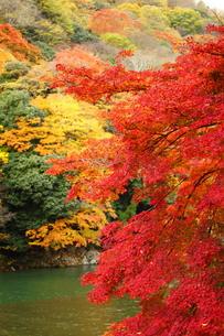 紅葉と川面の素材 [FYI00322092]