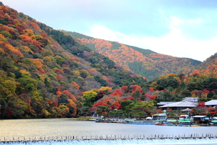 錦秋の嵐山と桂川の写真素材 [FYI00322095]
