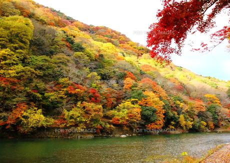 嵐山と保津川の素材 [FYI00322108]
