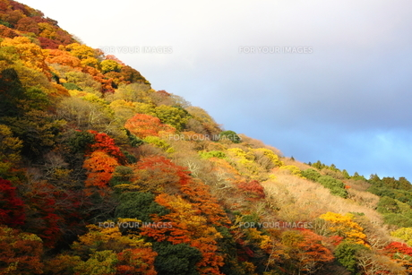 嵐山に射す朝日の素材 [FYI00322114]