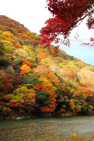嵐山と保津川の素材 [FYI00322116]