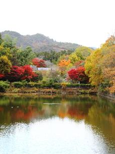 御髪神社小倉池の写真素材 [FYI00322130]