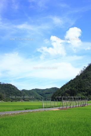 空と山と稲田の素材 [FYI00322180]