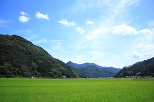 空と山と稲田の素材 [FYI00322191]