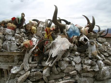 チベット牛の骨の写真素材 [FYI00322441]